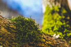 Autumn forest trees moss closeup focus. Autumn forest trees. nature green wood  backgrounds beautiful closeups Royalty Free Stock Images