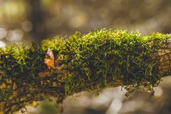 Autumn forest trees moss closeup Royalty Free Stock Photos