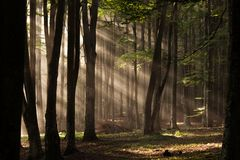Autumn forest trees. Nature green wood sunlight backgrounds. stock photo