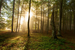 Autumn forest trees. nature green wood sunlight backgrounds. stock photography