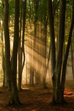 Autumn forest trees. nature green wood sunlight backgrounds. Autumn forest trees. nature green wood sunlight backgrounds Stock Photography
