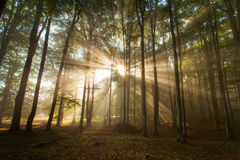 Autumn forest trees. nature green wood sunlight backgrounds. Stock Image