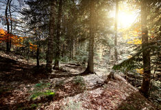 Autumn forest trees. Stock Images