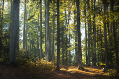 Autumn forest trees Royalty Free Stock Photos