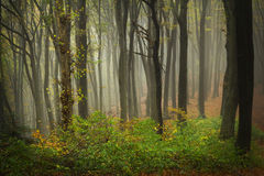 Autumn forest trees. Nature green wood sunlight backgrounds stock images