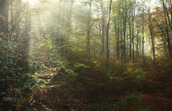 Autumn forest trees Stock Photography
