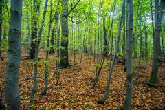 Autumn forest trees. nature green wood sunlight backgrounds. Royalty Free Stock Photo