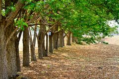 Autumn forest trees. nature green wood. Sunlight backgrounds.at chonburi thailand Stock Photography