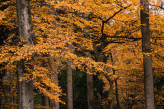 Autumn Forest Trees. Autumn Trees Park Nature Forest Stock Images