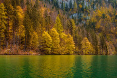 Autumn forest trees reflecting in lake Royalty Free Stock Images