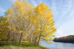 Autumn forest, trees, river and sky Stock Photography