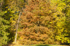 Autumn forest trees scene Royalty Free Stock Photos