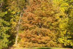 Autumn forest trees scene Royalty Free Stock Photos