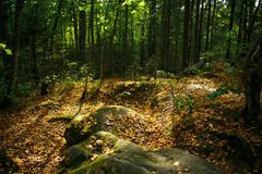 Autumn forest with trees and stones in the reserve of Kaluga region Devil`s settlement. The stone is illuminated by a ray of light and covered with yellow royalty free stock images