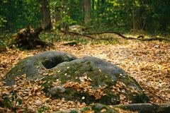 Autumn forest with trees and stones in the reserve of Kaluga region Devil`s settlement royalty free stock images