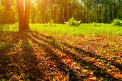 Autumn forest trees in sunny September forest lit by evening sunshine. Colorful autumn landscape royalty free stock photography