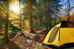 Autumn forest trees. yellow tent, Stock Photos