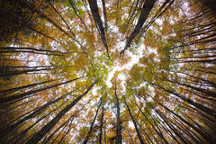 Autumn forest treetops Stock Photos