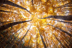Autumn forest treetops stock image