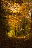 Autumn Forest Tunnel Images libres de droits