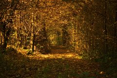 Autumn Forest Tunnel Stock Photography