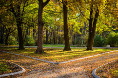 Autumn forest with two paths Royalty Free Stock Image
