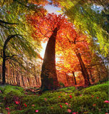 Autumn forest in Ukraine Royalty Free Stock Photography