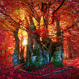 Autumn forest in Ukraine Royalty Free Stock Image