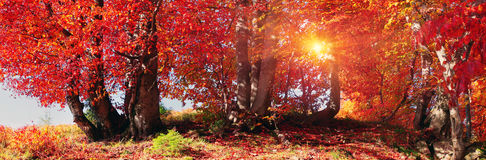 Autumn forest in Ukraine Royalty Free Stock Photos