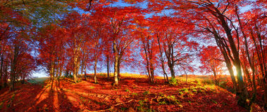 Autumn forest in Ukraine Stock Image