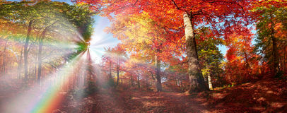Autumn forest in Ukraine Stock Photo