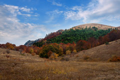 Autumn forest under a blue sky with clouds Royalty Free Stock Image