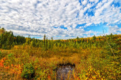 Autumn Forest Under a Puffy White Clouded Sky royalty free stock image