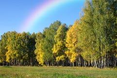 Autumn forest under a rainbow. Landscape of an autumn forest under a multicolored rainbow after the rain Stock Photos