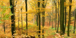Autumn forest in valley royalty free stock photography