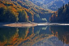 Autumn forest with reflection on lake. Autumn forest in various colors and its reflection in Biogradsko Lake in Montenegro royalty free stock image