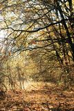 Autumn forest. Very nice autumn forest, its beauty is simply enchanting Stock Photography