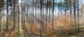 Autumn in the forest. Vibrant colors of autumn have paint this picturesque forest scenery royalty free stock image