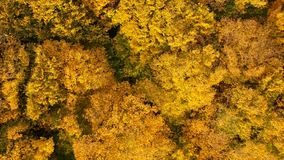 Autumn forest video made by drone stock video