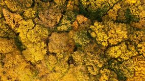 Autumn forest video made by drone stock footage