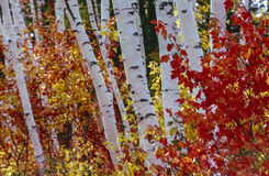 Autumn Forest view royalty free stock images