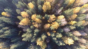 Autumn forest view from above stock footage
