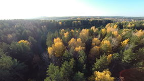 Autumn forest view from above stock video