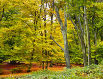 Autumn Forest Vista Royalty Free Stock Photos