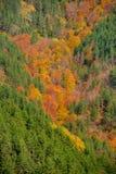 Autumn forest vista Stock Photo