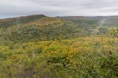 Autumn Forest Vista Stock Images