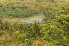 Autumn Forest Vista Stock Image