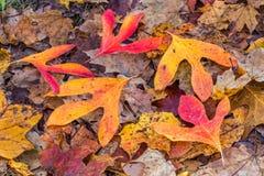 Autumn Forest-vloer Royalty-vrije Stock Afbeeldingen