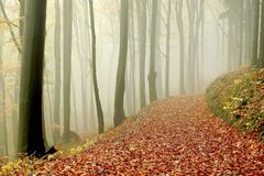 Autumn forest walk in the mountains fog Royalty Free Stock Photo