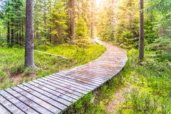Free Autumn Forest Walk. Touristic Wooden Plank Path Royalty Free Stock Photo - 168060375